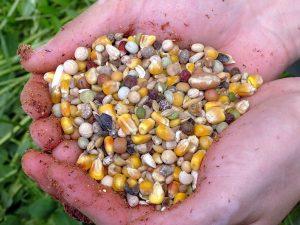 Mieszanka Seed Carp Mix na dłuższe zasiadki